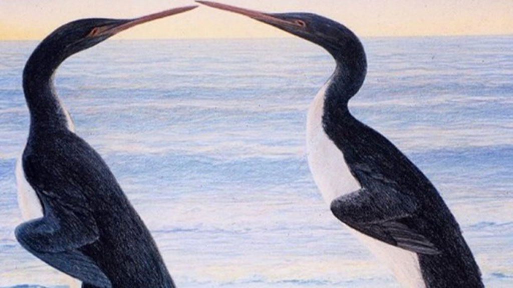 ancient penguin discoveries and evolution essay Today's world owes an immense debt to the mighty empires and great cities of ancient history their inventions and ideas enabled the advancement of human society and laid the foundation for modern.