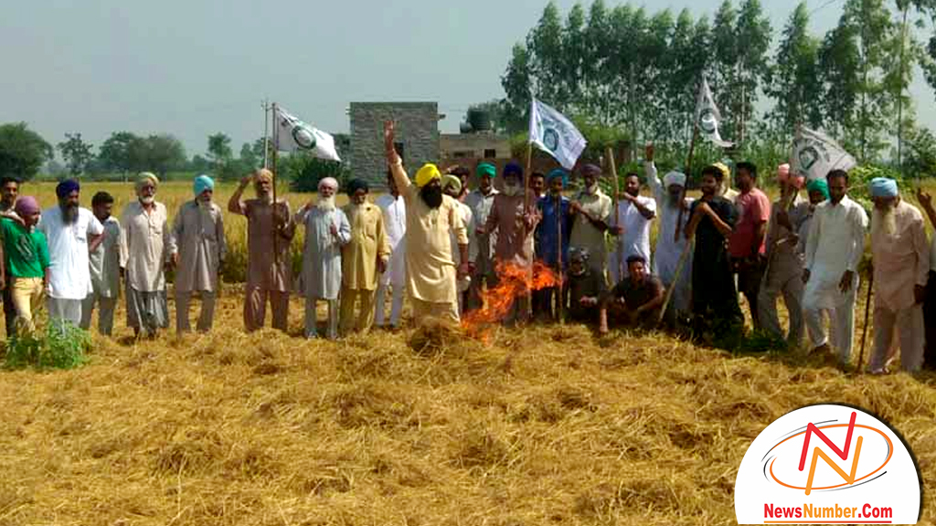 Image result for ਪਰਾਲੀ